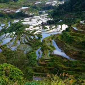 RIce Terraces, Banaue