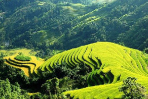 Banaue-Rice-Terraces-Philippines